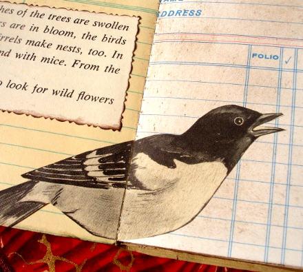 Bird book2