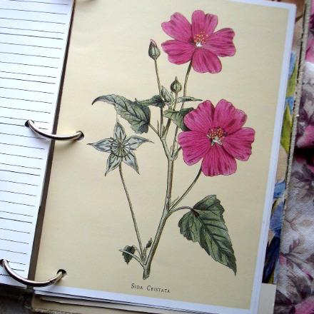 Floralbook4