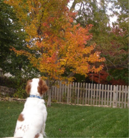 Looking for squirrels