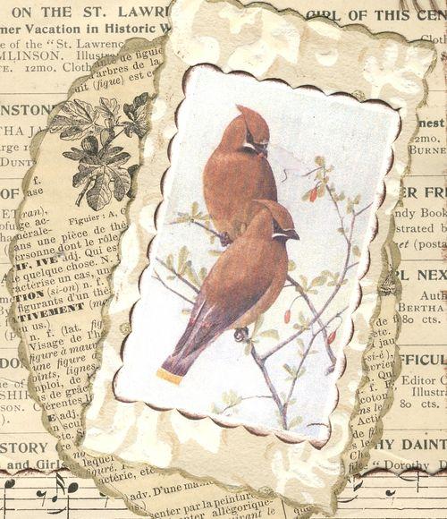 Birdcu