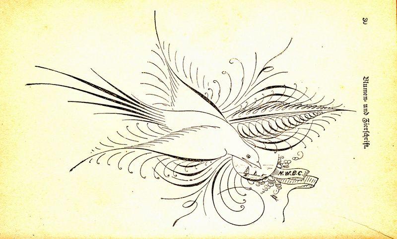 Spenserian bird