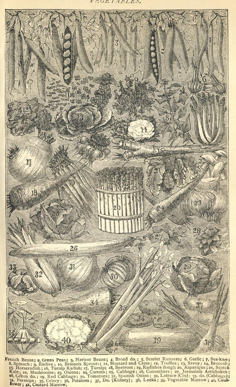 Image0-1
