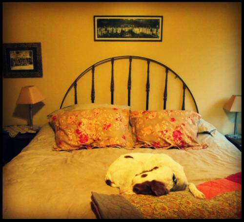 Bedroom buddy