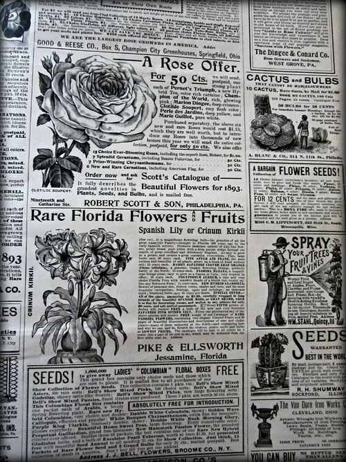 Garden ad