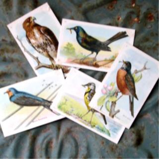 Bird_cards