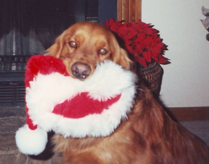 Boone_and_santa_hat_2