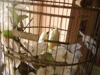 Birds_in_cage