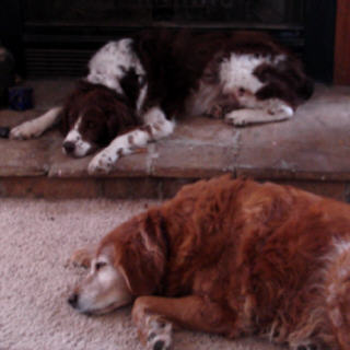 Sleepy_dogs